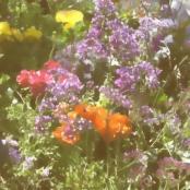 Beverlywood Garden Chalk
