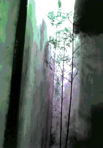 China Delicate Bamboo Green Black