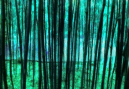 China Grove Black and Green
