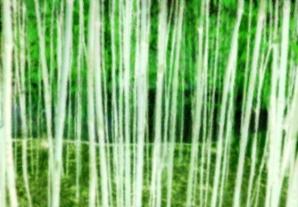 China Grove Green White