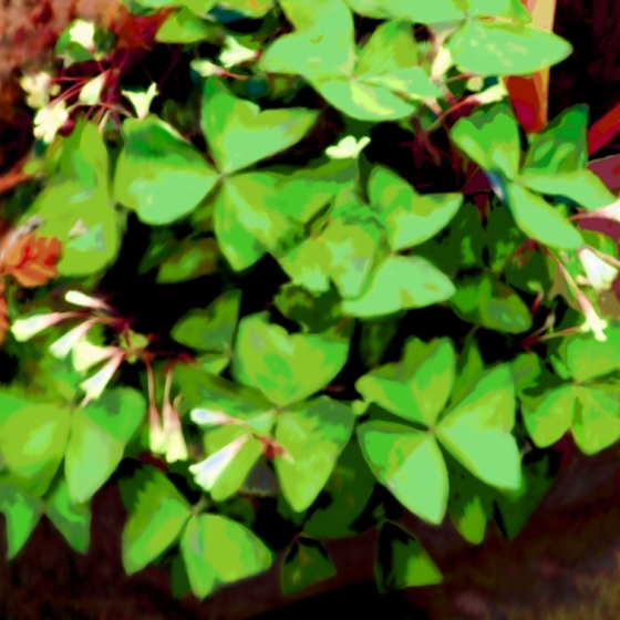 Butterfly Plant Green