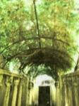 Italian Arbor Dark Green