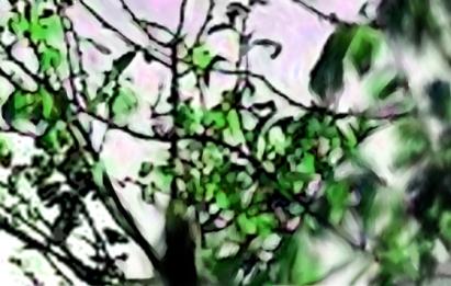 Italian Leaves Close Up Green