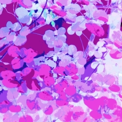 Leaves Square Pink Purple