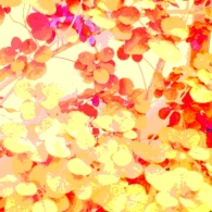 Leaves Square Red Yellow
