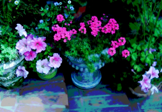 Pots On Steps Bright Pink Flowers
