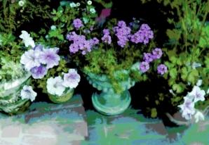 Pots On Steps Lavender