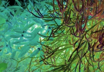 Suculents Aqua Purple Green