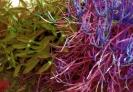 Suculents Green Purple
