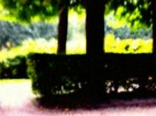 Tree at Rodin's Garden Paris Natural