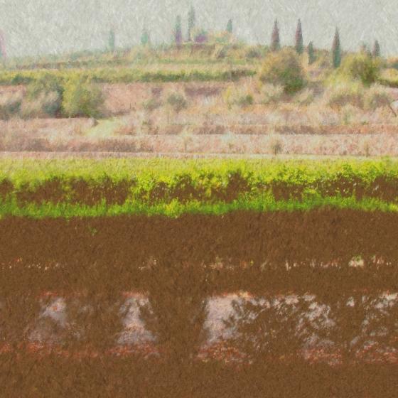 Villa Giona Olive Terrace Impressionist Pastel