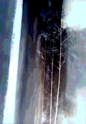 A delicate bamboo in a light well in a garden in China.